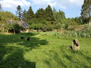 Chickens at Holycombe