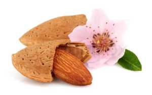 sweet-almond-with-flower